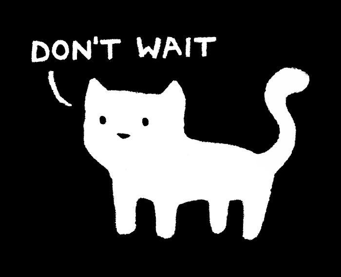"""Don't wait"", says the cat."