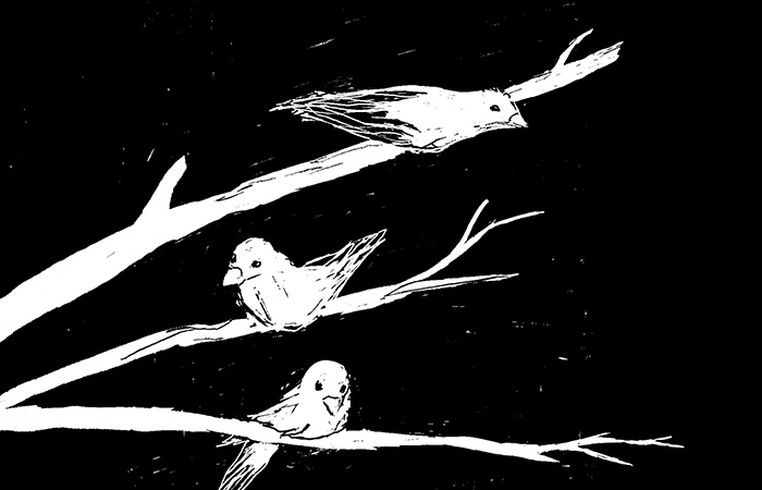 """Night Birds"" by Justyna Dorsz"